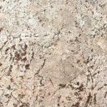 Bianco-Antico-Granite-1
